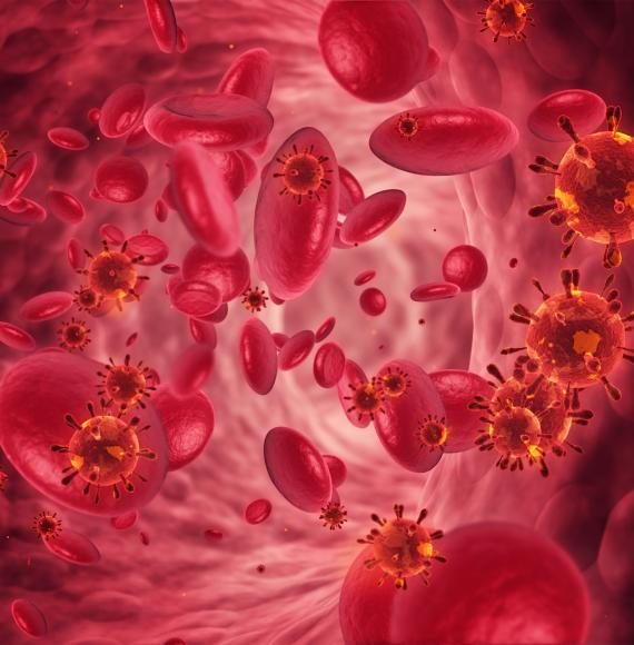 Artist impression of red blood cells and bacterium within circulatory system